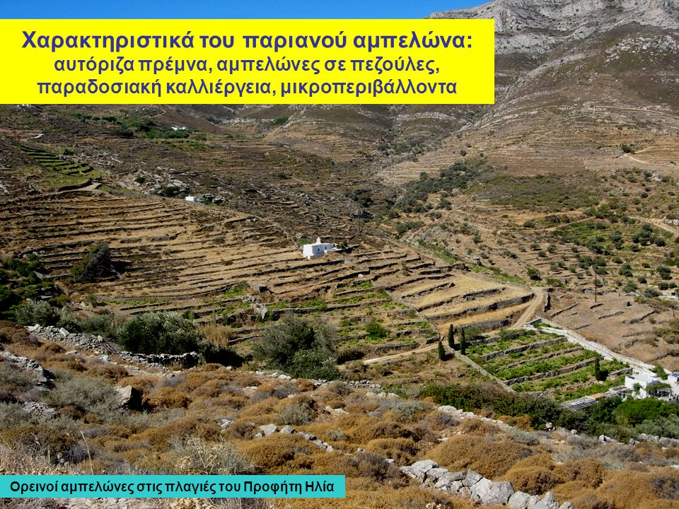 Ορεινοί αμπελώνες στις πλαγιές του Προφήτη Ηλία