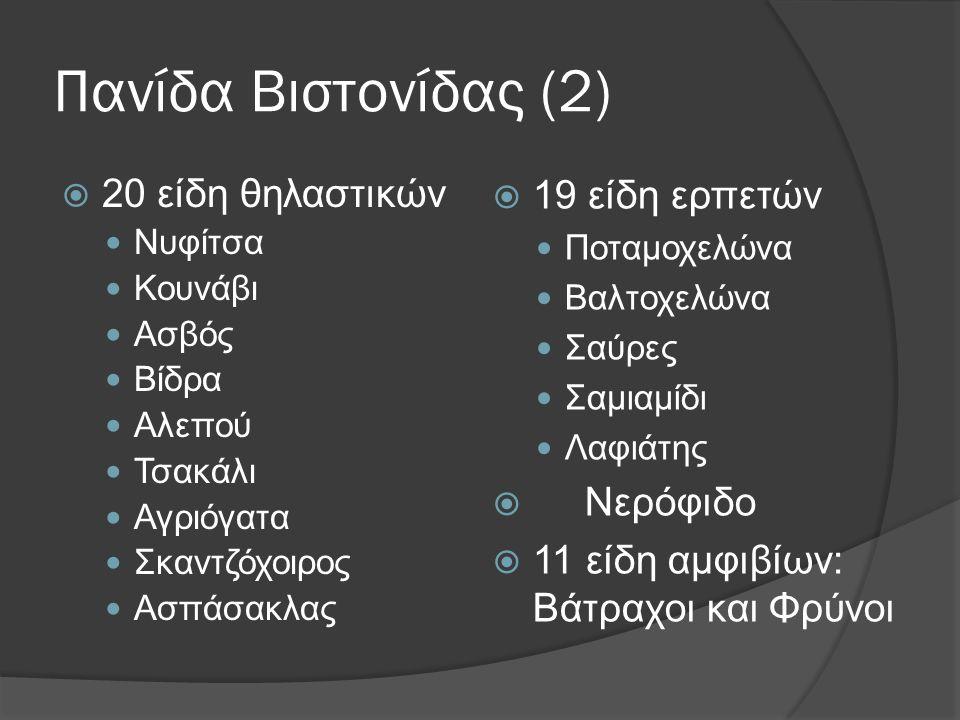 Πανίδα Βιστονίδας (2) 19 είδη ερπετών 20 είδη θηλαστικών Νερόφιδο