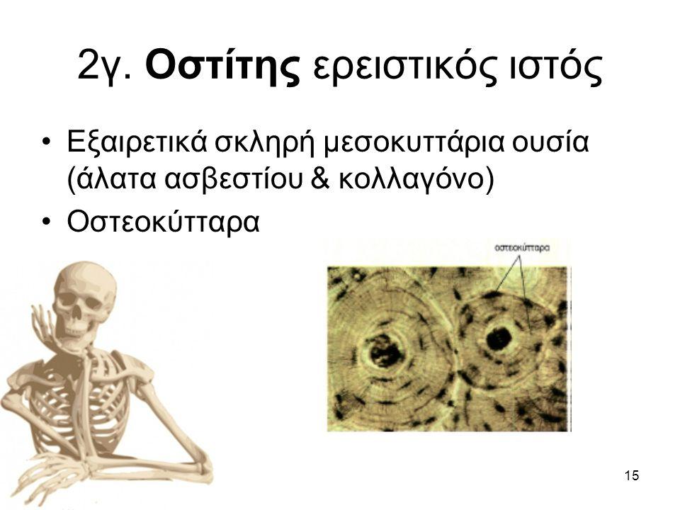 2γ. Οστίτης ερειστικός ιστός