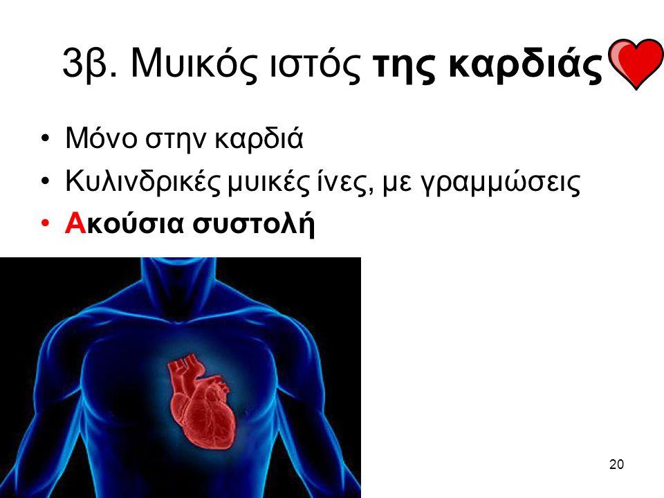 3β. Μυικός ιστός της καρδιάς
