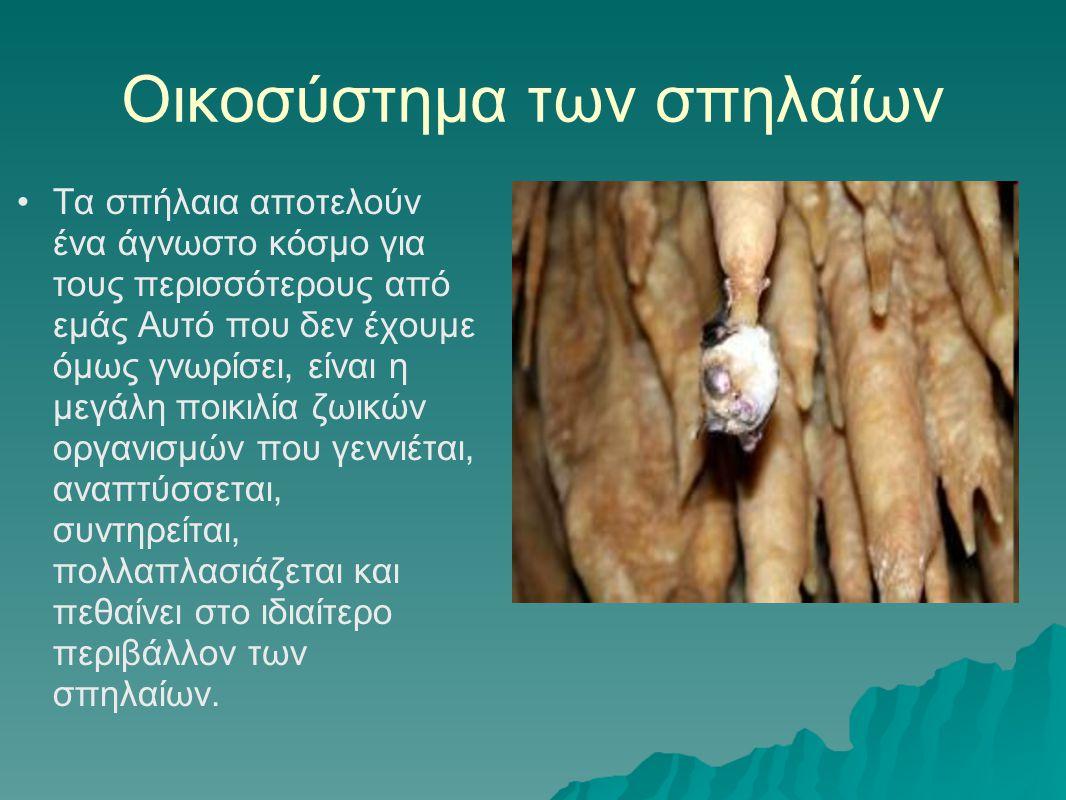 Οικοσύστημα των σπηλαίων