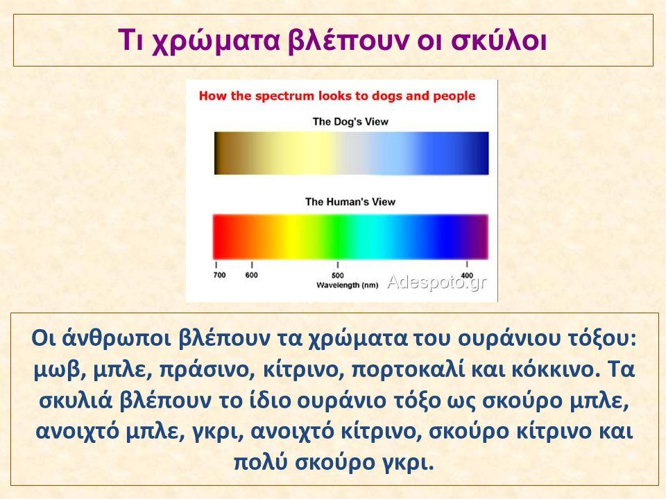 Τι χρώματα βλέπουν οι σκύλοι