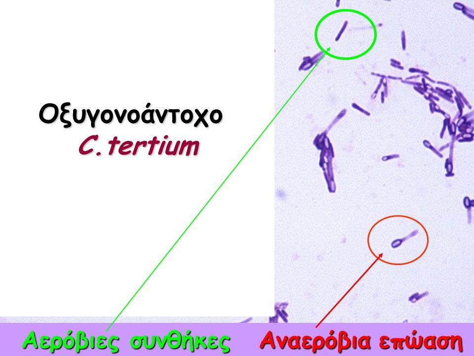 Οξυγονοάντοχο C.tertium