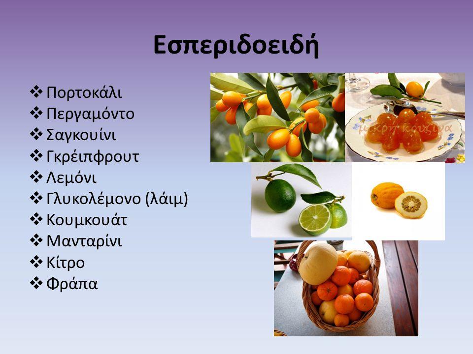 Εσπεριδοειδή Πορτοκάλι Περγαμόντο Σαγκουίνι Γκρέιπφρουτ Λεμόνι