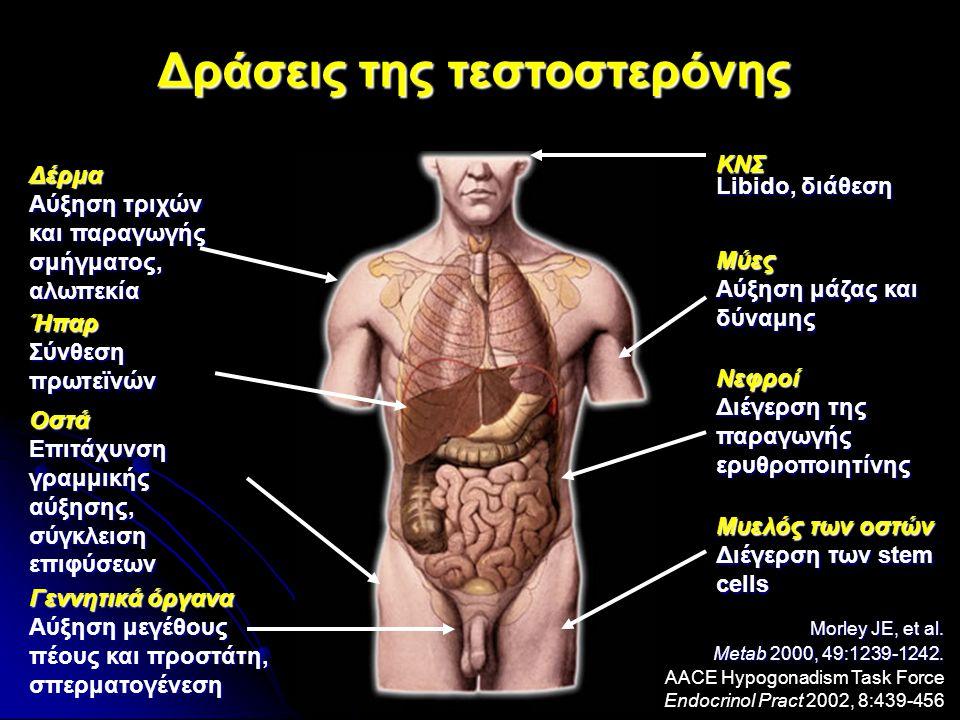 Δράσεις της τεστοστερόνης