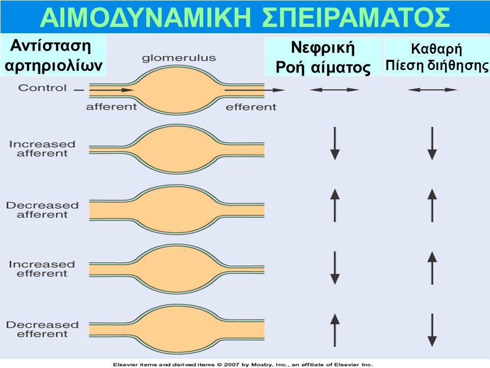 ΑΙΜΟΔΥΝΑΜΙΚΗ ΣΠΕΙΡΑΜΑΤΟΣ