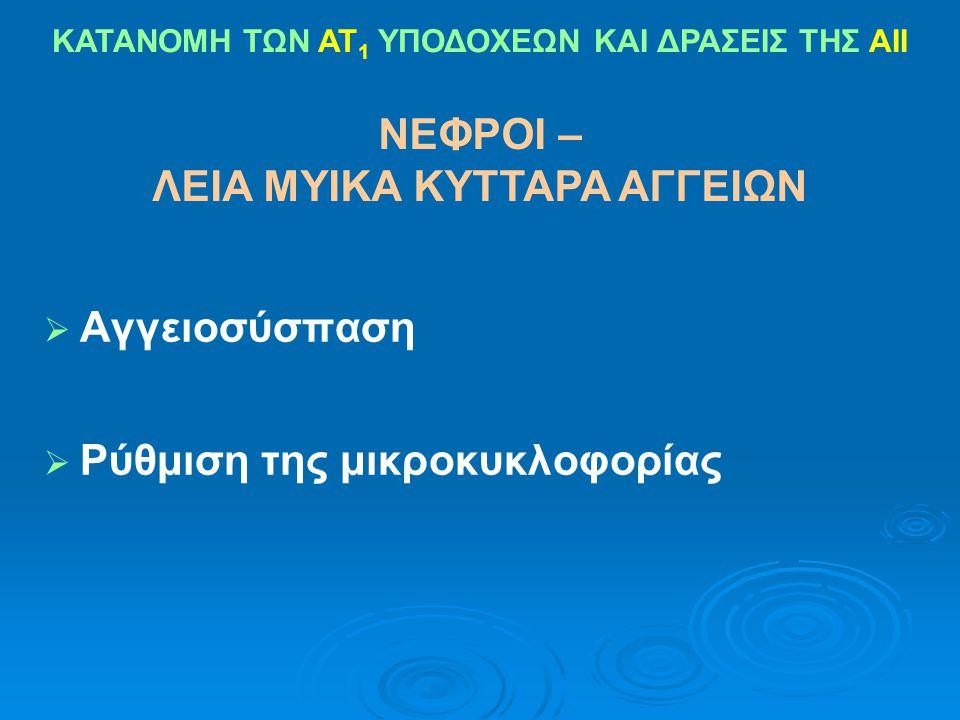 ΝΕΦΡΟΙ – ΛΕΙΑ ΜΥΙΚΑ ΚΥΤΤΑΡΑ ΑΓΓΕΙΩΝ