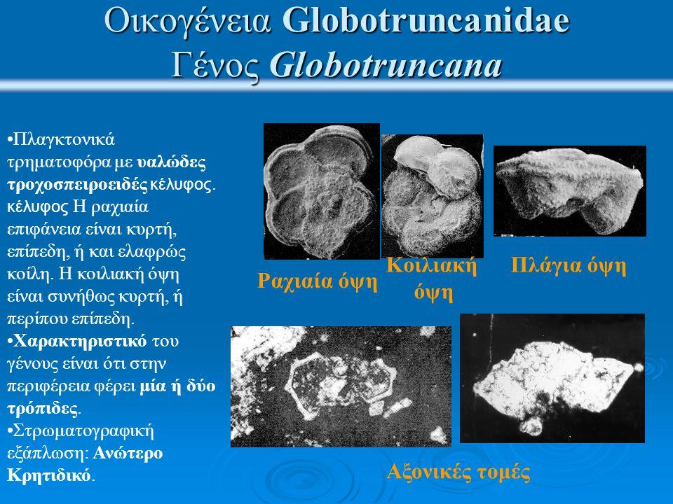 Οικογένεια Globotruncanidae Γένος Globotruncana