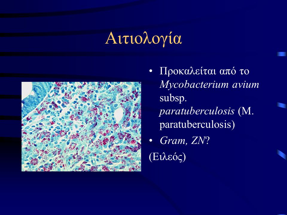 Αιτιολογία Προκαλείται από το Mycobacterium avium subsp. paratuberculosis (M. paratuberculosis) Gram, ZN