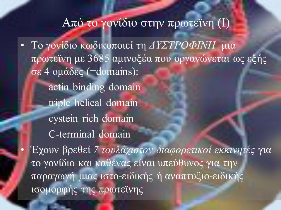 Από το γονίδιο στην πρωτεϊνη (I)