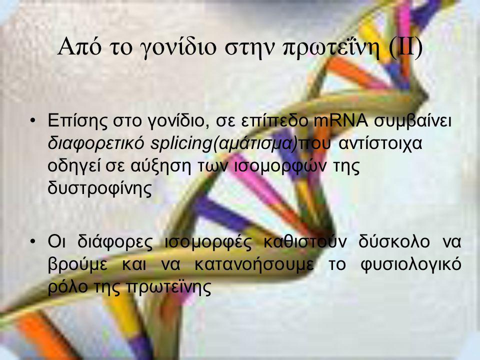 Από το γονίδιο στην πρωτεΐνη (II)