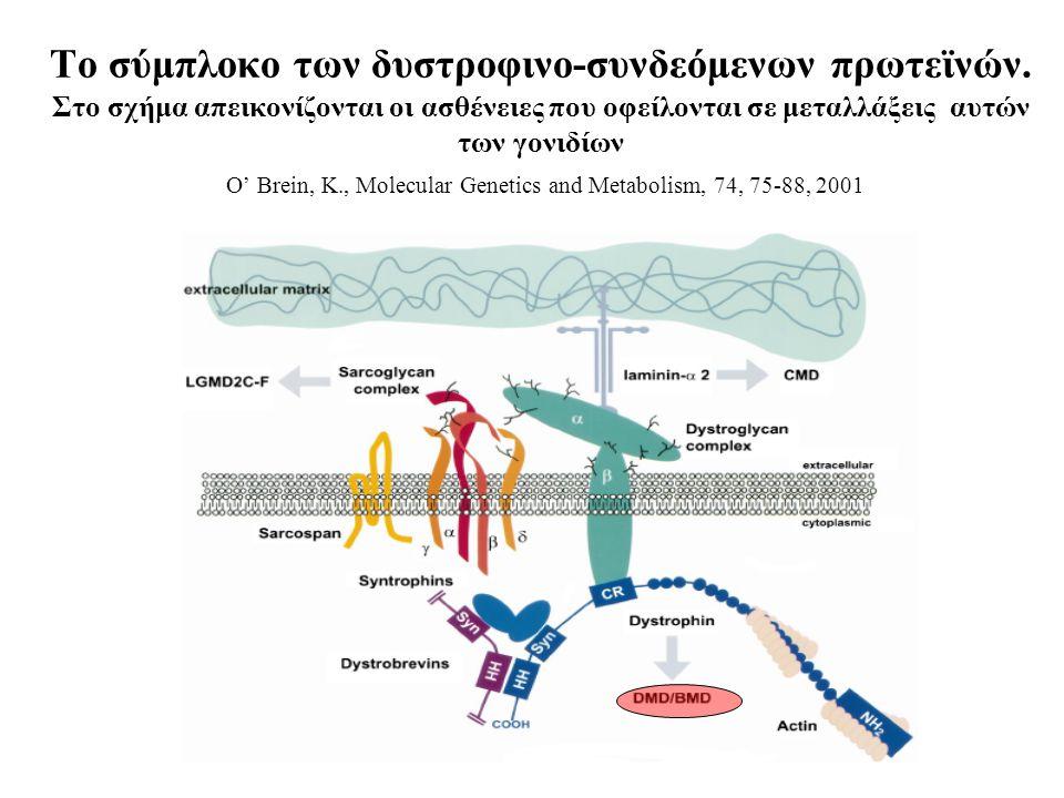 Το σύμπλοκο των δυστροφινο-συνδεόμενων πρωτεϊνών