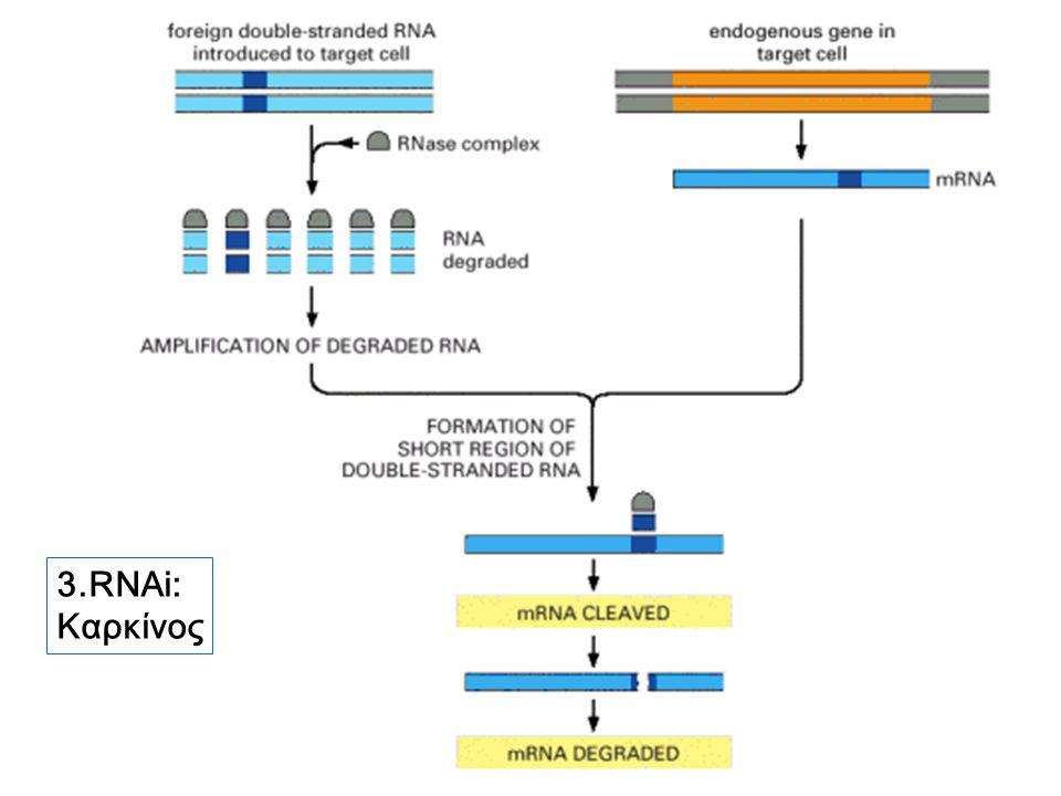 3.RNAi: Καρκίνος