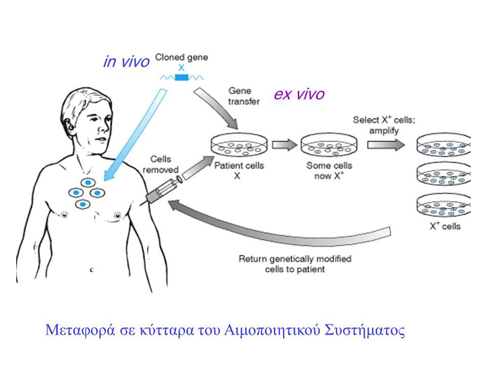 in vivo ex vivo Μεταφορά σε κύτταρα του Αιμοποιητικού Συστήματος