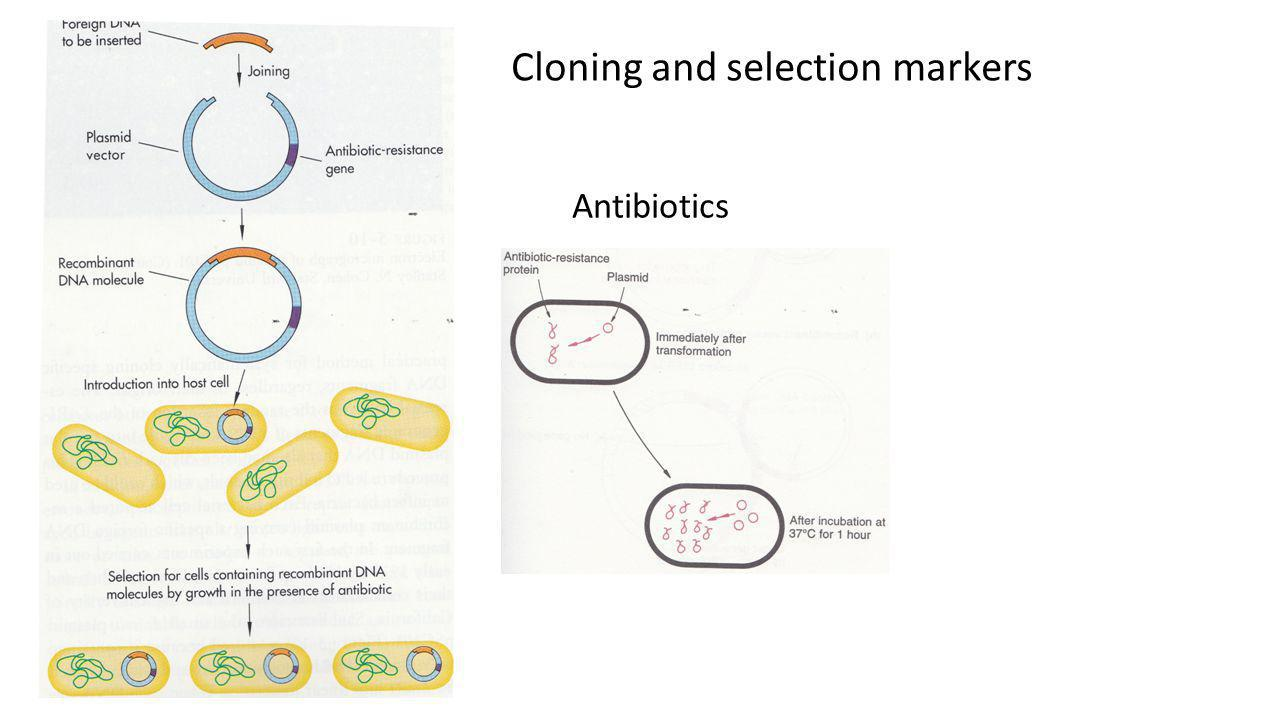 Cloning and selection markers