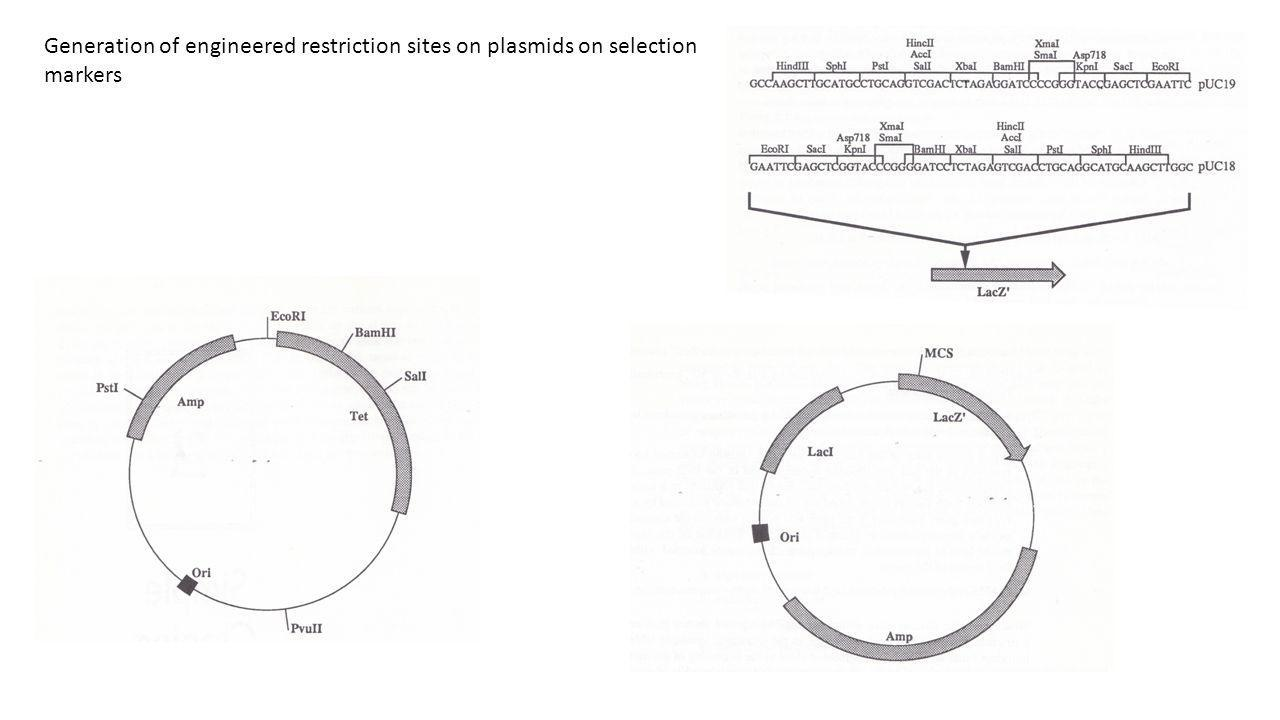 Generation of engineered restriction sites on plasmids on selection