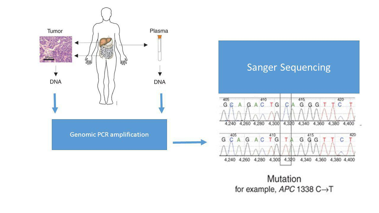 Genomic PCR amplification