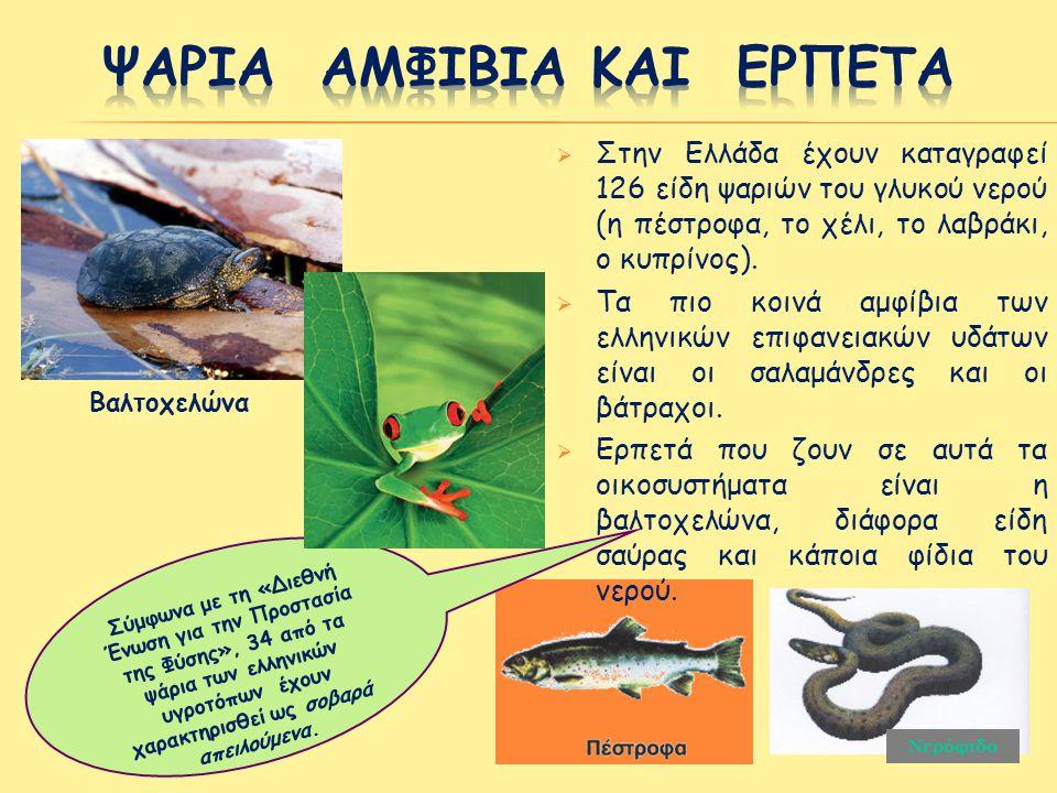 Ψαρια αμφιβια και ερπετα