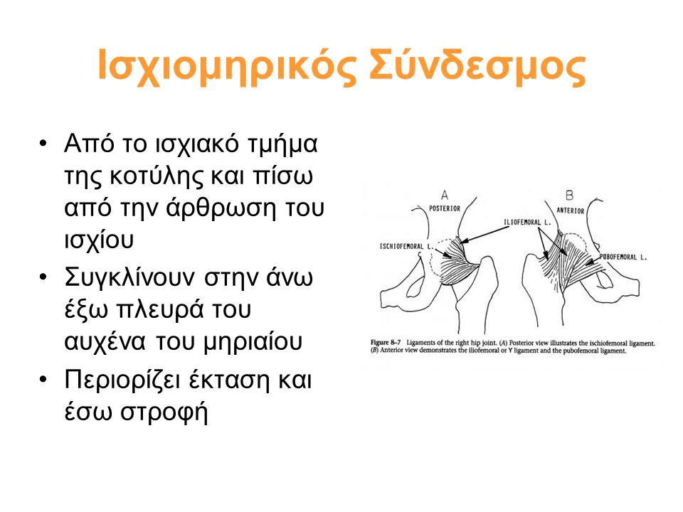 Ισχιομηρικός Σύνδεσμος
