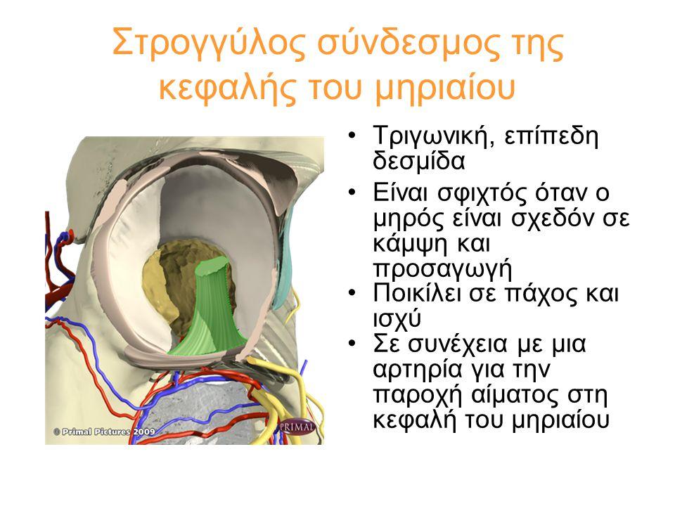 Στρογγύλος σύνδεσμος της κεφαλής του μηριαίου