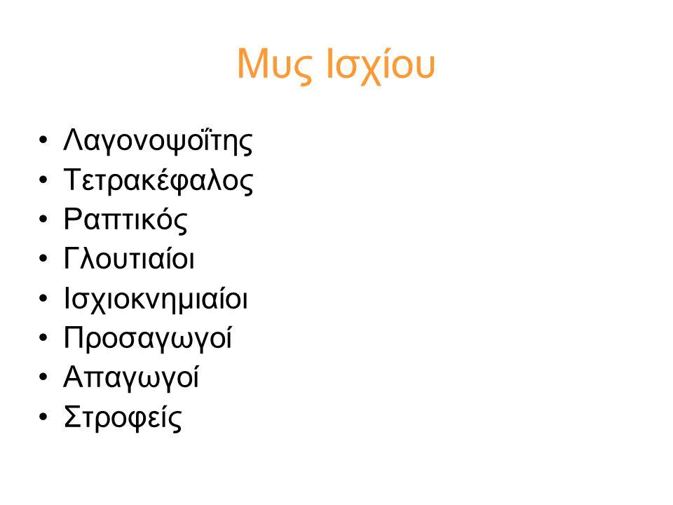 Μυς Ισχίου Λαγονοψοΐτης Τετρακέφαλος Ραπτικός Γλουτιαίοι