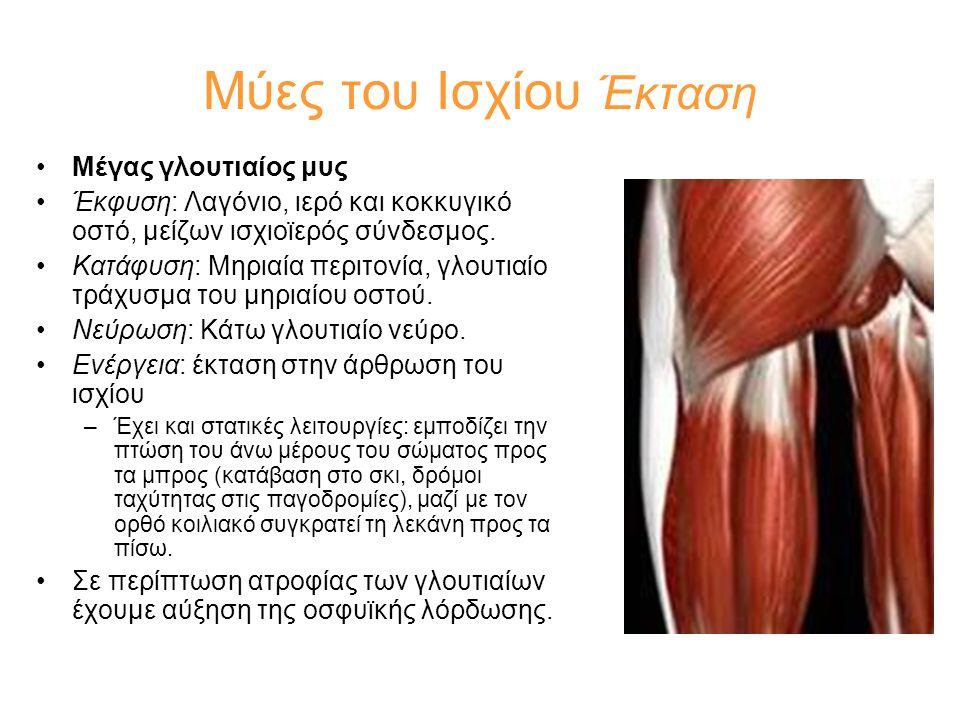 Μύες του Ισχίου Έκταση Μέγας γλουτιαίος μυς