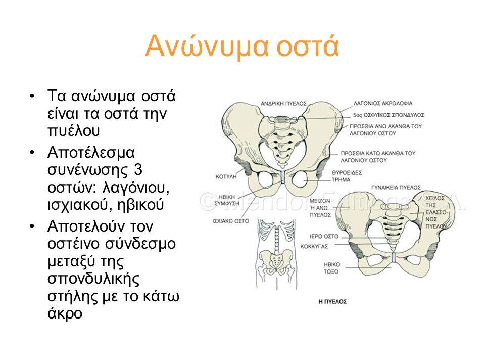 Ανώνυμα οστά Τα ανώνυμα οστά είναι τα οστά την πυέλου
