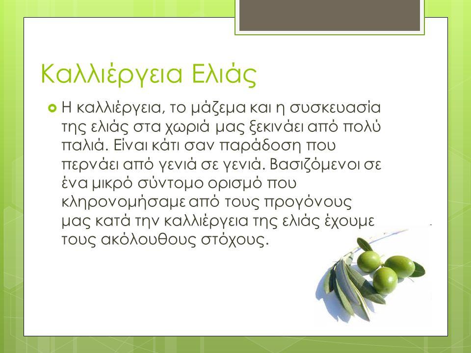 Καλλιέργεια Ελιάς