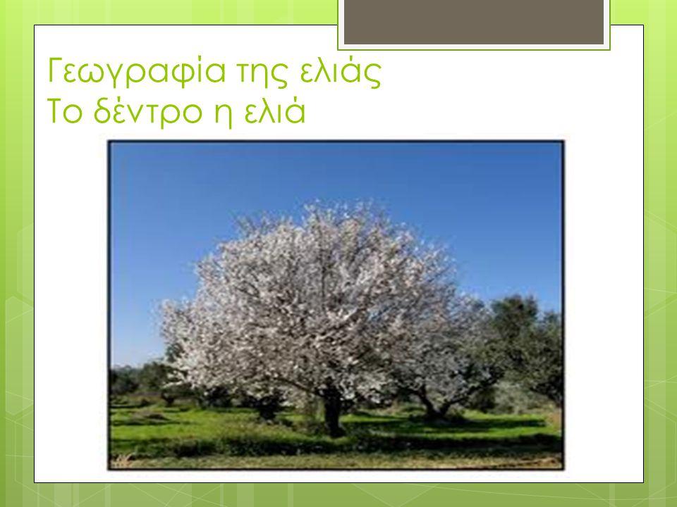 Γεωγραφία της ελιάς Το δέντρο η ελιά