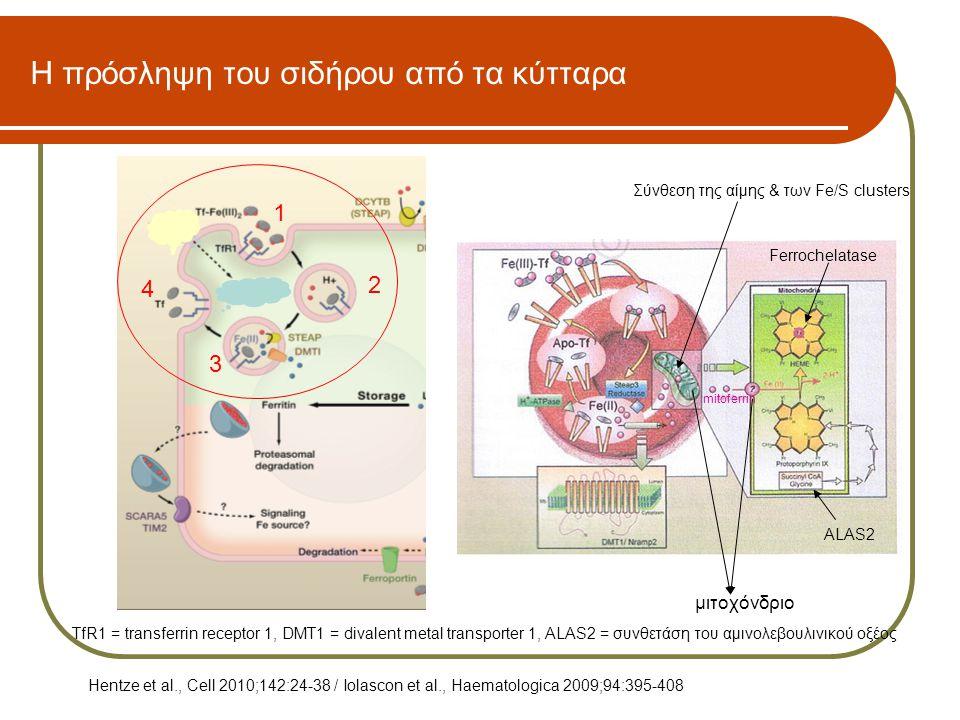 Η πρόσληψη του σιδήρου από τα κύτταρα
