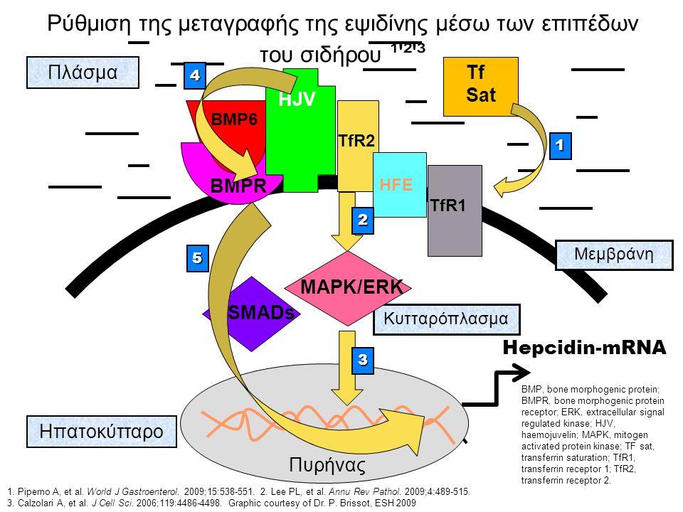 Ρύθμιση της μεταγραφής της εψιδίνης μέσω των επιπέδων του σιδήρου ¹ ² ³