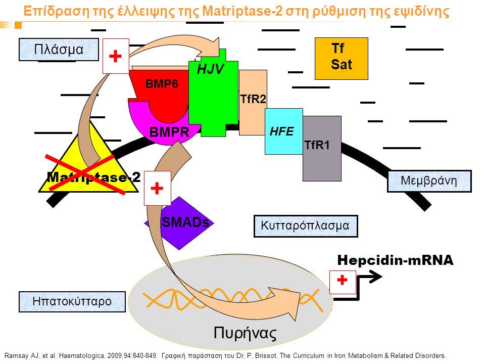 Επίδραση της έλλειψης της Matriptase-2 στη ρύθμιση της εψιδίνης