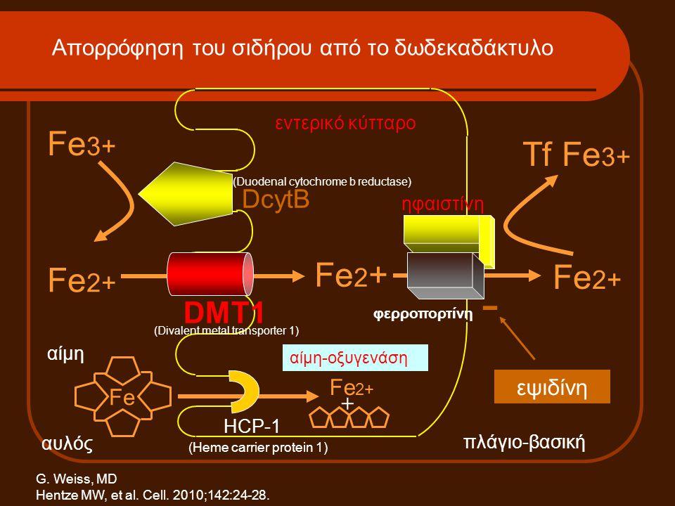 - Fe3+ Tf Fe3+ Fe2+ DMT1 DcytB