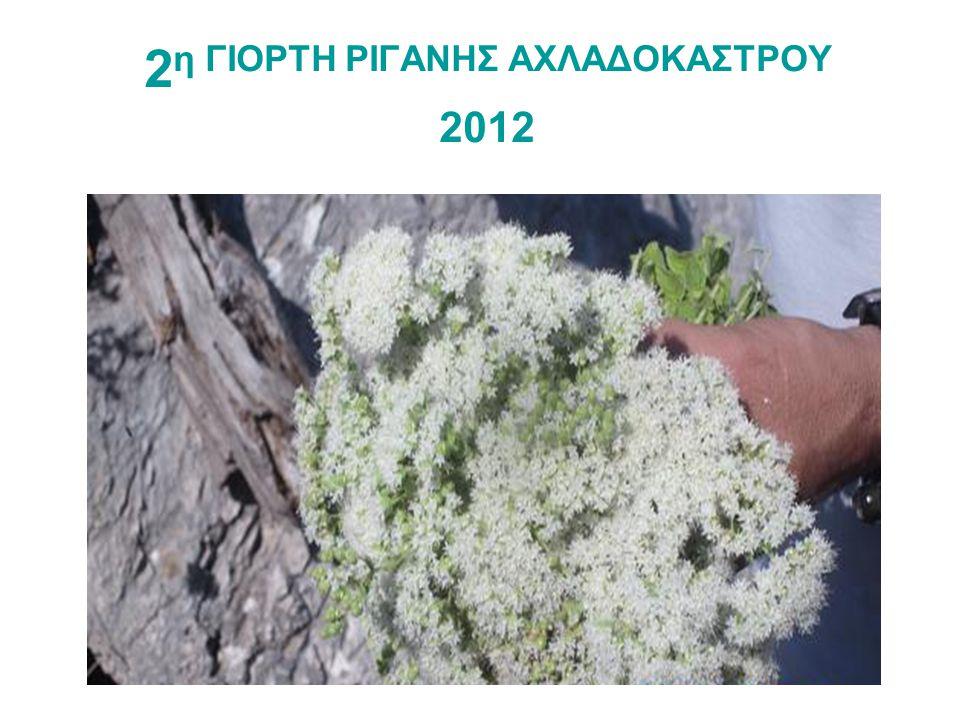 2η ΓΙΟΡΤΗ ΡΙΓΑΝΗΣ ΑΧΛΑΔΟΚΑΣΤΡΟΥ 2012