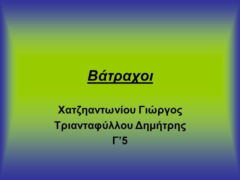 Χατζηαντωνίου Γιώργος Τριανταφύλλου Δημήτρης Γ'5