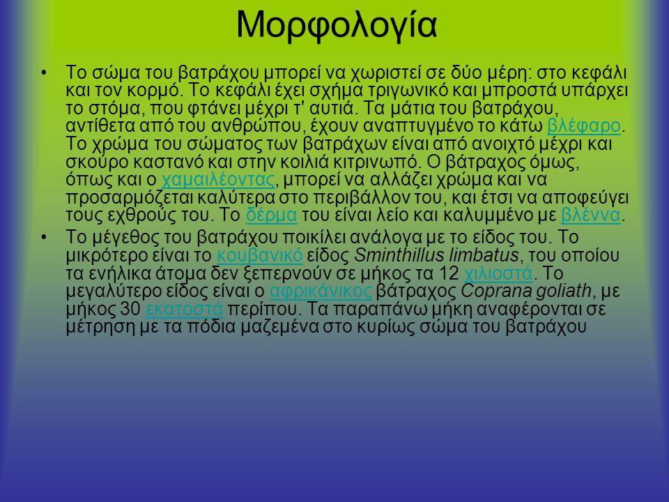 Μορφολογία