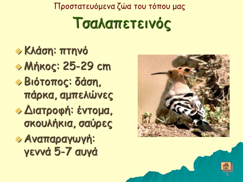 Τσαλαπετεινός Κλάση: πτηνό Μήκος: 25-29 cm