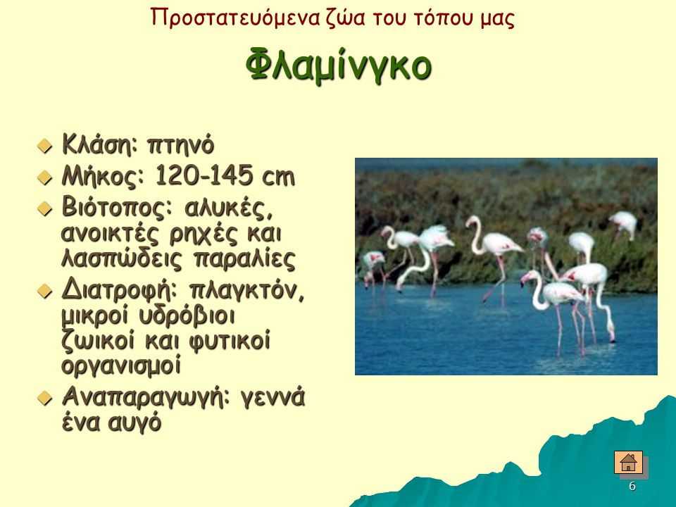 Φλαμίνγκο Κλάση: πτηνό Μήκος: 120-145 cm
