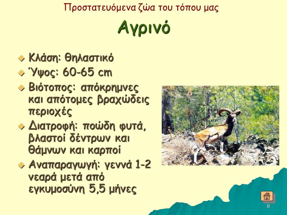 Αγρινό Κλάση: θηλαστικό Ύψος: 60-65 cm