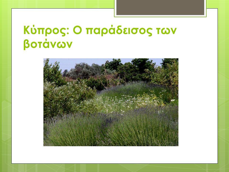 Κύπρος: Ο παράδεισος των βοτάνων
