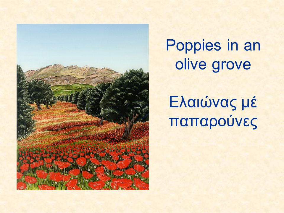 Poppies in an olive grove Ελαιώνας μέ παπαρούνες