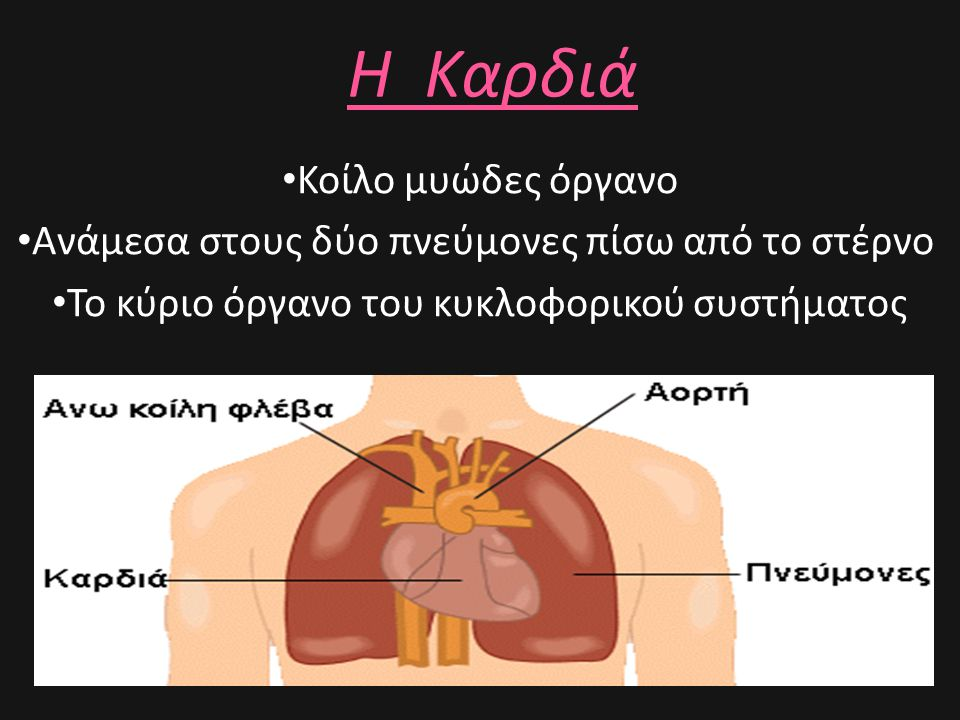 Η Καρδιά Κοίλο μυώδες όργανο