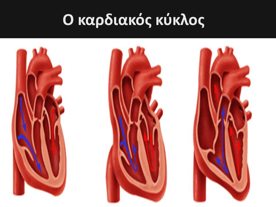 Ο καρδιακός κύκλος