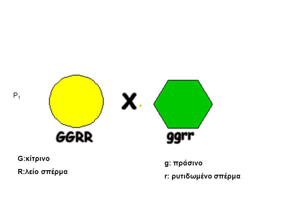 P1 G:κίτρινο R:λείο σπέρμα g: πράσινο r: ρυτιδωμένο σπέρμα