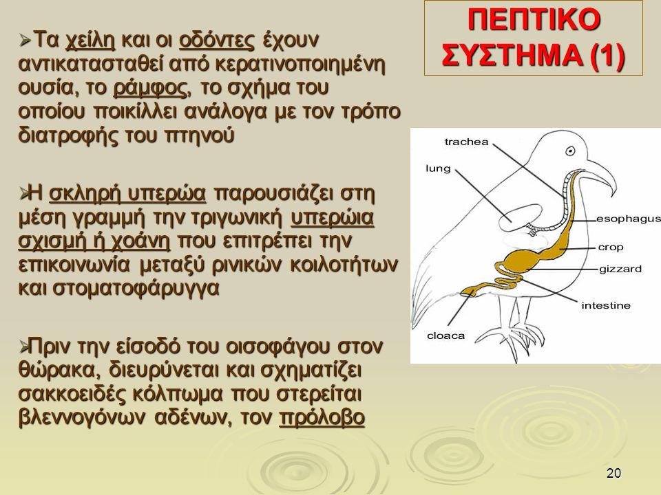 ΠΕΠΤΙΚΟ ΣΥΣΤΗΜΑ (1)