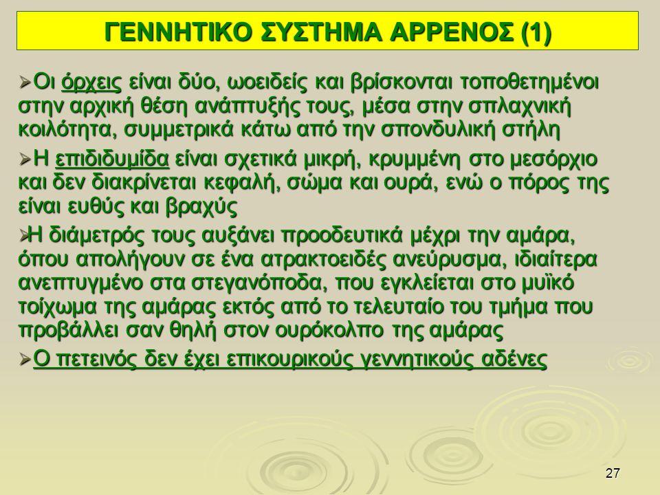 ΓΕΝΝΗΤΙΚΟ ΣΥΣΤΗΜΑ ΑΡΡΕΝΟΣ (1)