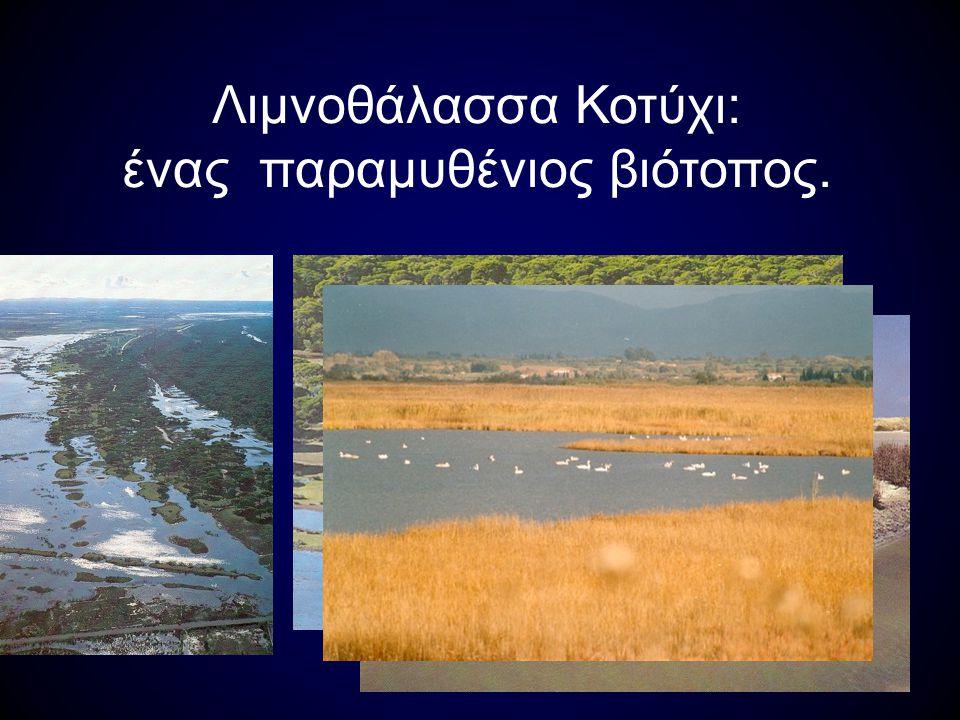Λιμνοθάλασσα Κοτύχι: ένας παραμυθένιος βιότοπος.