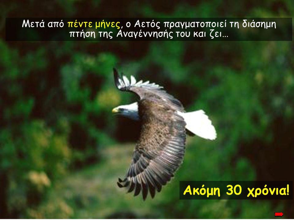Μετά από πέντε μήνες, ο Αετός πραγματοποιεί τη διάσημη πτήση της Αναγέννησής του και ζει…