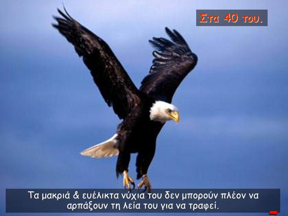 Στα 40 του. In its' 40's. Its' long and flexible talons can no longer grab prey which serve as food.
