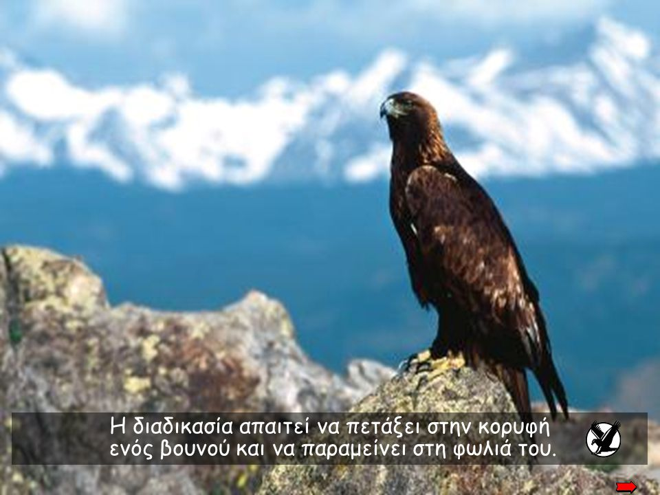 The process requires that the eagle fly to a mountain top and sit on its' nest